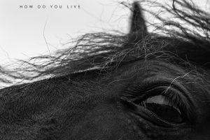 New Amon Tobin Album How Do You Live Set for September 24 on Nomark Records